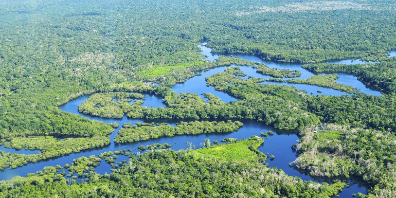 amazon forest 2 CIFOR Neil Palmer.jpg
